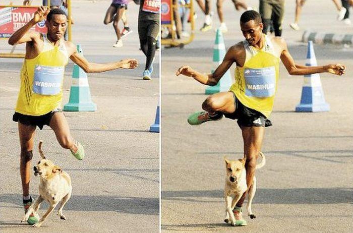 Як захиститися від собак на пробіжці?